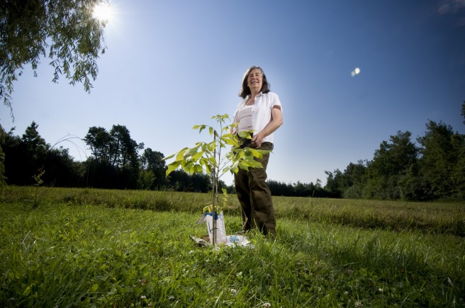 Diana Beresford-Kroeger stands beside a kingnut tree. Diana has planted several of these rare trees, known as the anti-famine tree of Canda's First Nations people, to test their range and hardiness and to preserve their seed stocks. The apple tree (main photo) is about 100 years old and survives from the late-19th-century settlement period of this region. It still provides the family with apples for cooking and storage. Photo by Colin Rowe.