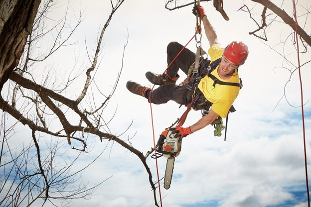 THIS CITY: Catching up with professional tree climber Leilak Anderson