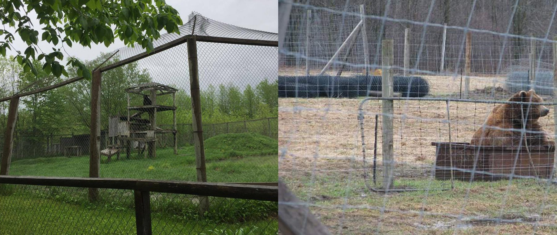 Different perspectives: Left, courtesy of Papanack co-owner Kerry Bayford. Right, courtesy of Michele Thorn of the Animal Defense League of Ottawa